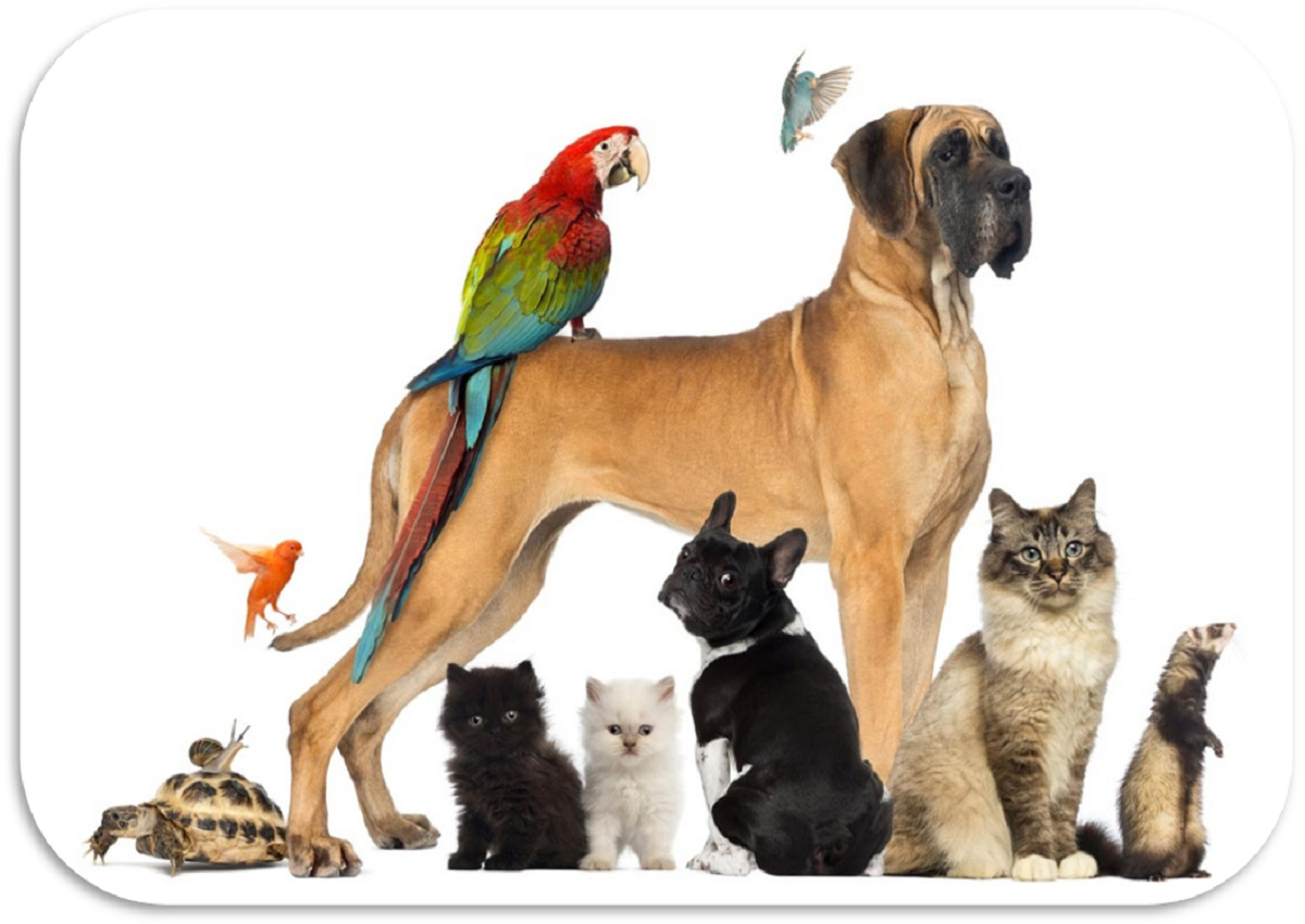 PERCHÈ AVERE ANIMALI DOMESTICI | Il Mondo degli Animali